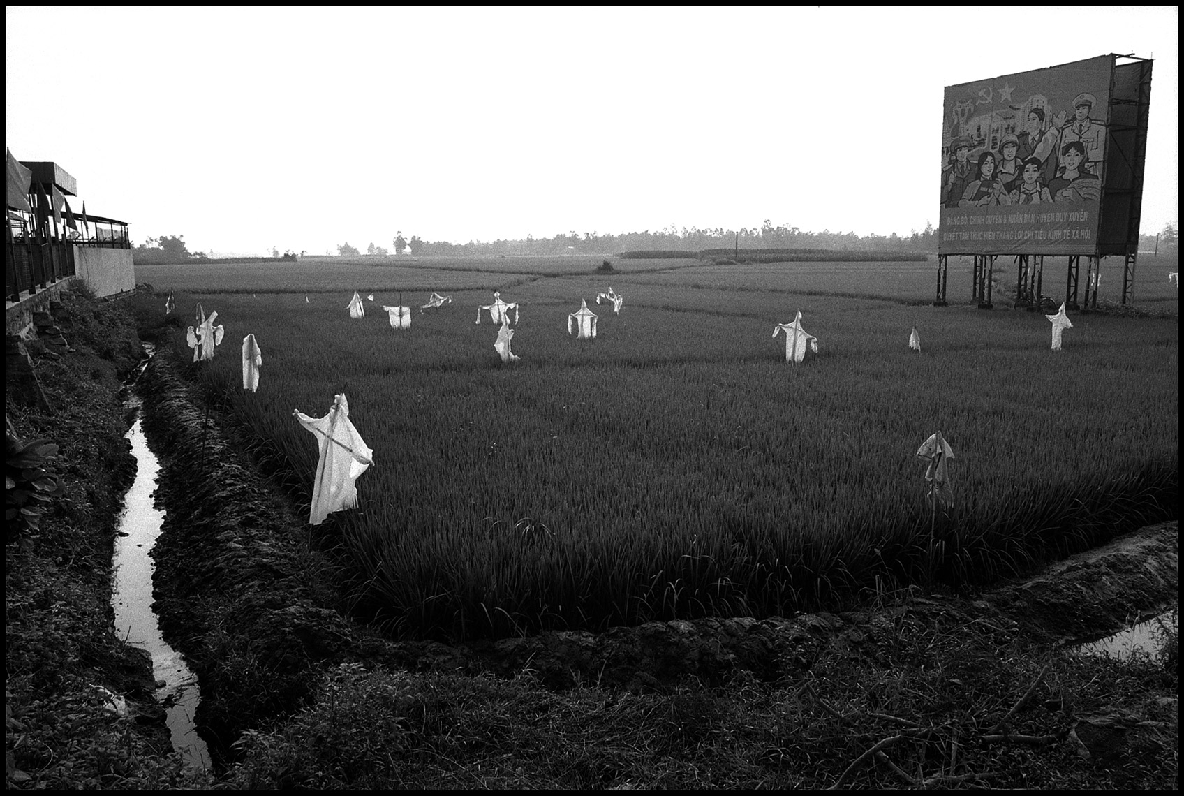 Rice Paddies and Scarecrows